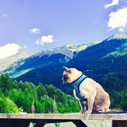 Asia believes she was always destined for the mountains. #Asia #SiameseCat #Asiagoeswest #mountains #blueskies #majestic